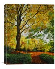 Autumn Colours Sheffield Botanical Gardens, Canvas Print