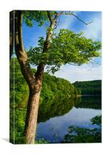 Damflask Reservoir, Canvas Print
