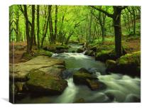 Golitha Falls,Bodmin Moor,Cornwall, Canvas Print