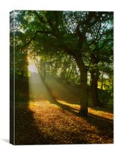 Light Rays in the Park, Canvas Print