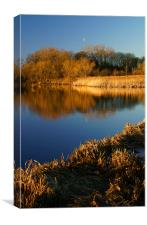 Denaby Ings Nature Reserve, Canvas Print