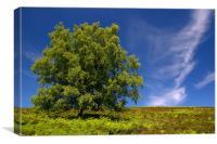 Burbage Moor in Summer, Canvas Print