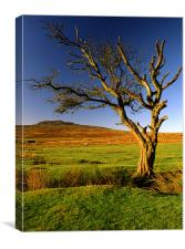 Dead Tree on Dartmoor, Canvas Print