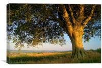 Oak Tree, Canvas Print