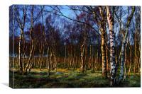 Silver Birch Wood, Canvas Print