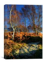Silver Birch on Froggatt Edge, Canvas Print