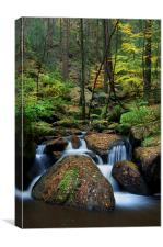 Wyming Brook Nature Reserve, Canvas Print