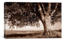 Oak Tree in Sepia, Canvas Print