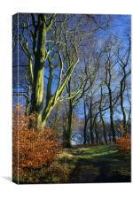 Longshaw Woods, Canvas Print