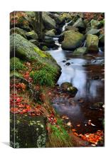 Autumn Colours in Padley Gorge, Canvas Print