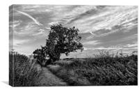 Country Lane in Mono, Canvas Print