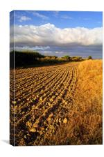 Ploughed Field, Canvas Print