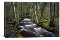 Woodland Walk at Rivelin, Canvas Print
