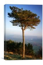 Back Tor Scots Pine, Canvas Print