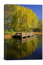 Weston Park Pond, Spring Reflections, Canvas Print