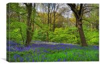 Wooley Wood Bluebells, Canvas Print