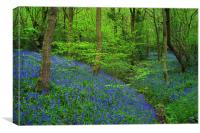 Wooley Wood Bluebells 2, Canvas Print