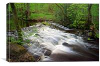 Rivelin Falls in Spring 2, Canvas Print