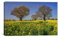 Rapeseed field & Trees, Derbyshire, Canvas Print