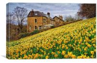 Field of Daffodils, Canvas Print