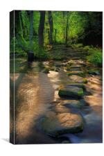 Golden Stepping Stones , Canvas Print