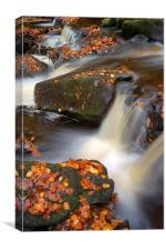 On the Rocks in Padley Gorge , Canvas Print