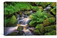 Wyming Brook in Summer, Canvas Print