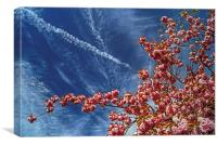 Cherry Blossum Sky , Canvas Print