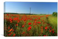 Poppies and Telegraph poles , Canvas Print