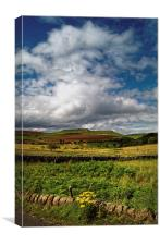 Longshaw Summer View , Canvas Print