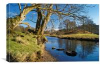 Banks of the River Brathay                      , Canvas Print