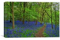 Woolley Wood  Bluebells                           , Canvas Print