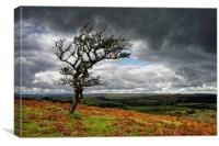 Dark Clouds over Combestone Tor                   , Canvas Print