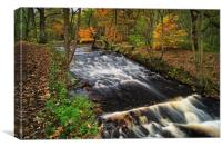 Rivelin in Autumn                                 , Canvas Print