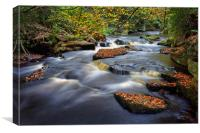 Rivelin Autumn Colours                            , Canvas Print