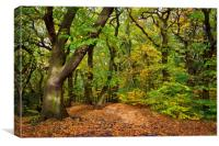 Ecclesall Woods in Autumn                         , Canvas Print