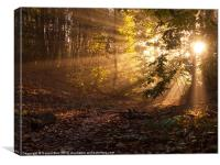 early morning sunshine in woodland, Canvas Print