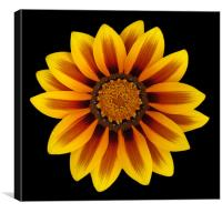A beautiful flower, Canvas Print