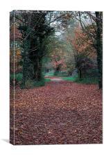 Dinton Pastures Country Park, Canvas Print