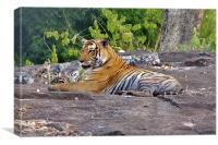 Tiger Resting, Canvas Print