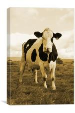 Irish Cow, Canvas Print