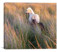 pony mare and tiny foal, Canvas Print