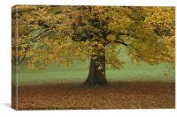 Leaf Fall., Canvas Print
