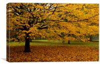 Primrose Hill Leaf Fall, Canvas Print