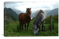 Loch Duich Horses, Canvas Print