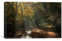Epping Forest Light, Canvas Print