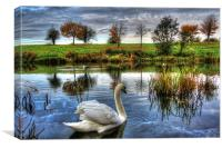 Lonely swan, Canvas Print