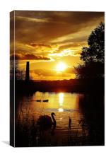 Golden glow, sunset, Canvas Print