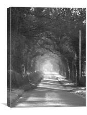 mysterious lane, Canvas Print