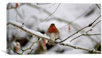 British robin red breast, Canvas Print